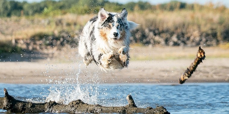 5 Healthiest Dog Breeds