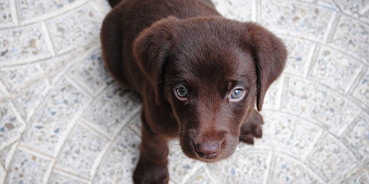 Puppy Development Stages: Everything You Need to Know