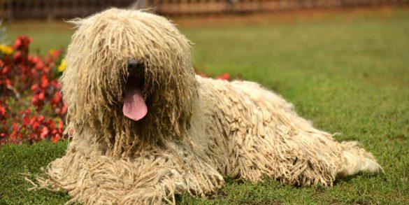Top Ugliest Dogs