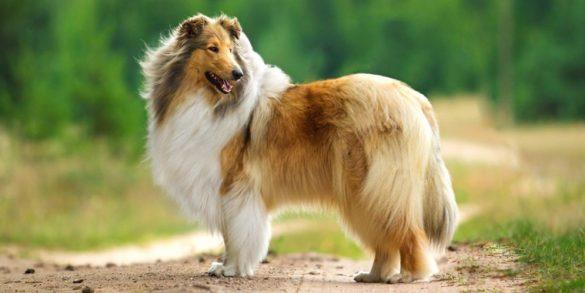Top Medium Dog Breeds