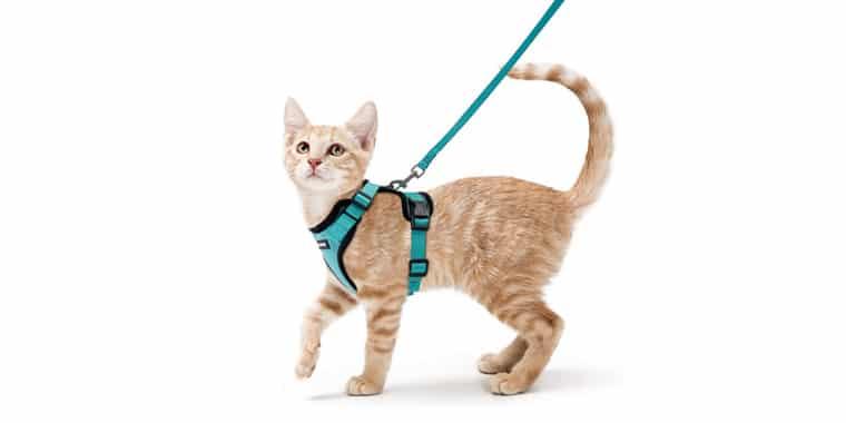 9 Best Cat Harnesses
