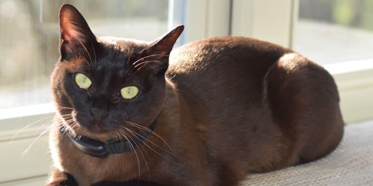 4 Best Flea Collar for Cats in 2020