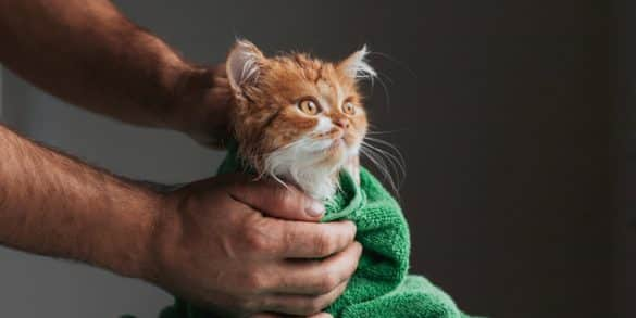 Best Flea Shampoos for Cats