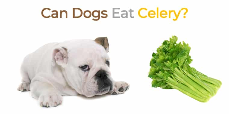 Can Dogs Eat Celery? Your Guide to Celery for Dogs