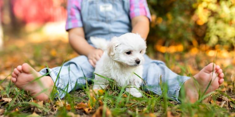 Your Guide to Hypoallergenic Dog Breeds