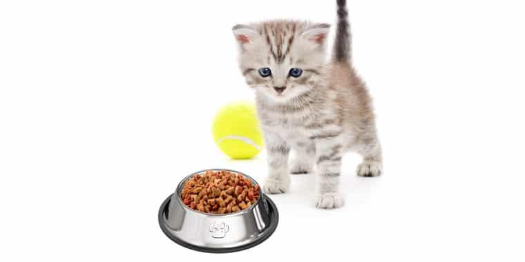 9 Best Grain Free Cat Foods in 2020